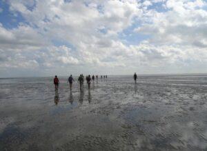 Vakantie Waddeneilanden | Wadlopen | Waddenhop.com