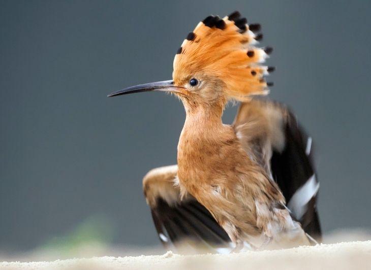 Familie vakantie Waddeneilanden - hop vogel - Waddenhop
