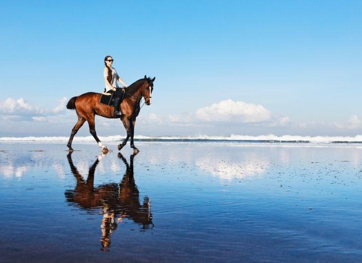 Familie vakantie Waddeneilanden - paardrijden - waddenhop