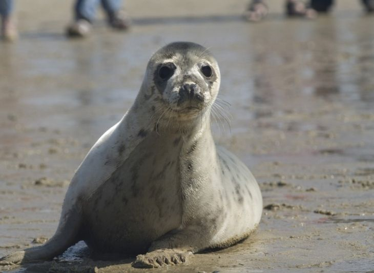 Rondreis Waddeneilanden - zeehond - Waddenhop
