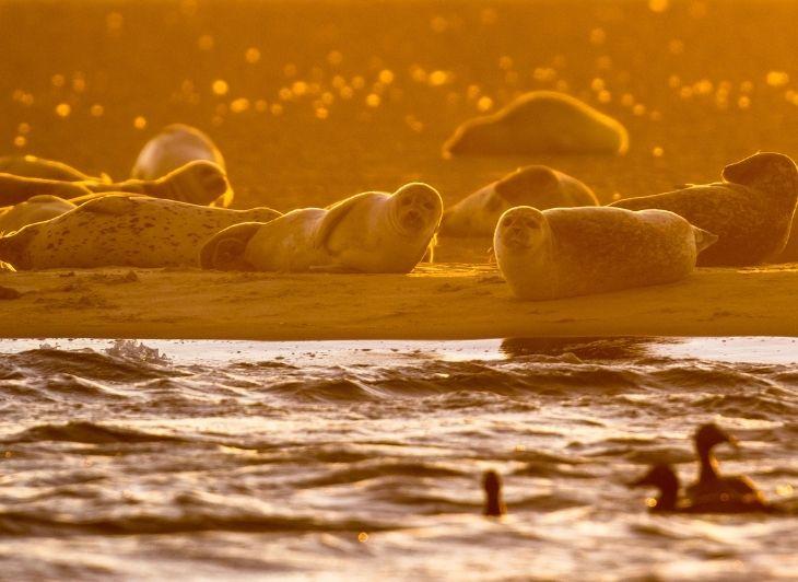 Weekje Waddeneilanden - zeehonden - Waddenhop