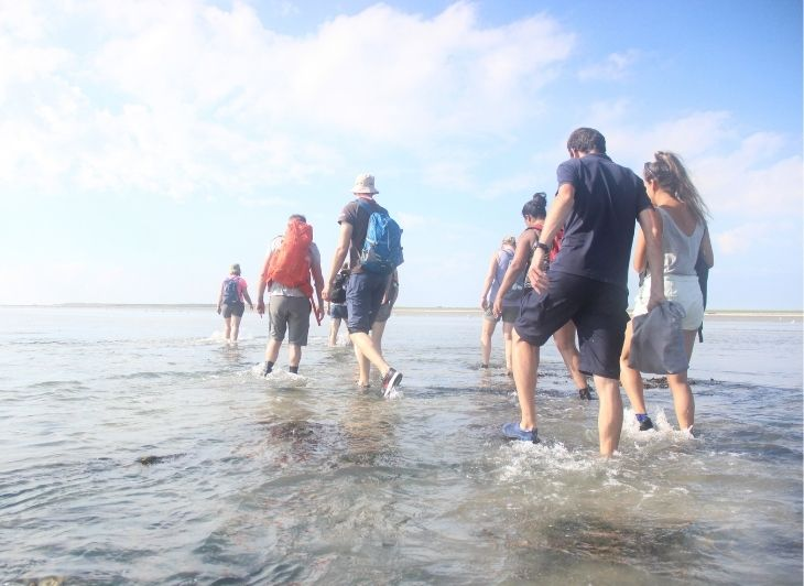 Vacature reisbegeleiding - wadlopen op Ameland - Waddenhop